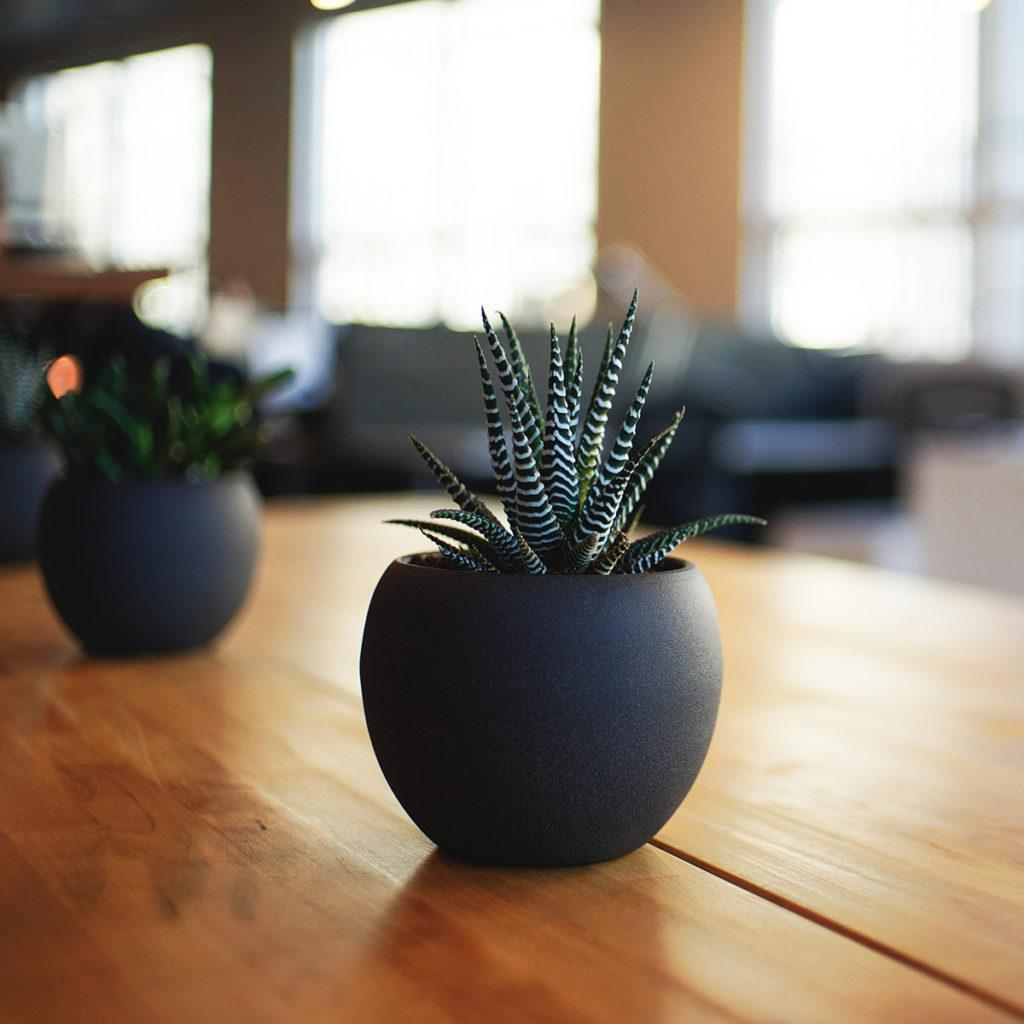 Inomhusmiljö växter