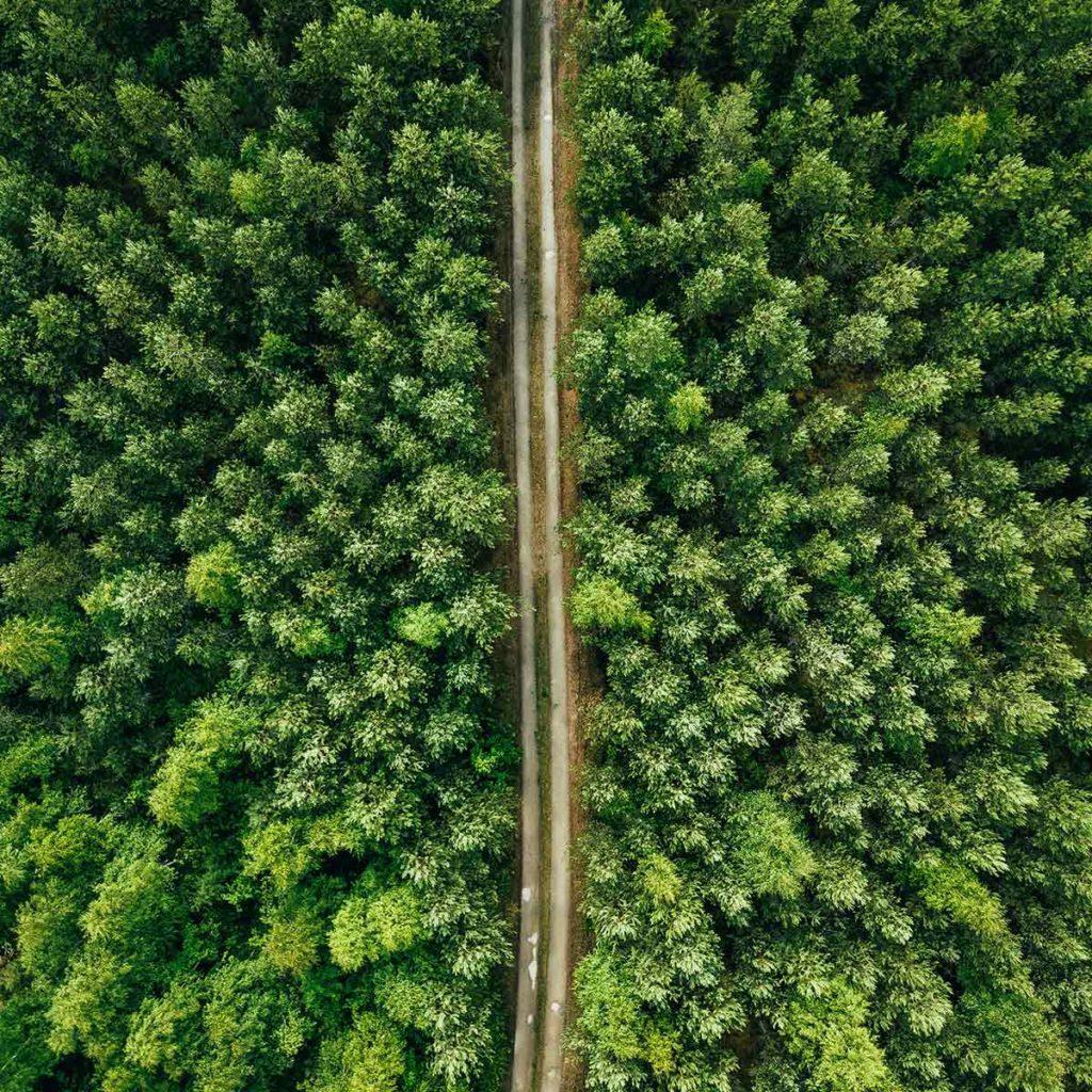 Miljö skog